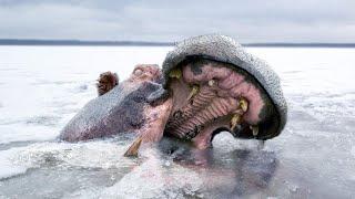 10 Shocking Animals That Were Frozen In Ice!