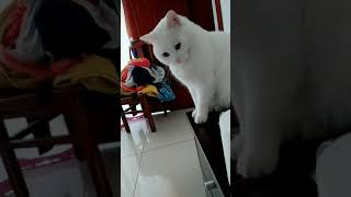 Cats are so funny you will die laughing 688
