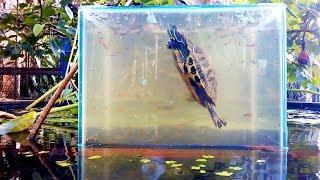 Làm bể cá lộn ngược theo cách của bác nông dân (how to make an up-side-down fish tank)