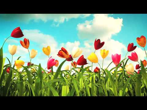 Flowers blooming.Bees buzzing,  Time for Spring Fever at  BAIERL Kia.