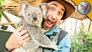 Koala Gives Stinky Hugs!