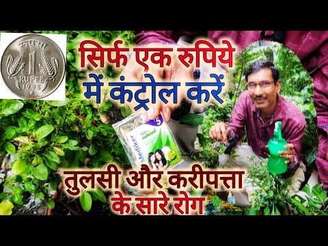 सिर्फ १ रुपिये में तुलसी और करीपत्ता के पौधों से कीटों का नाश करें / Control insects Tulsi organic