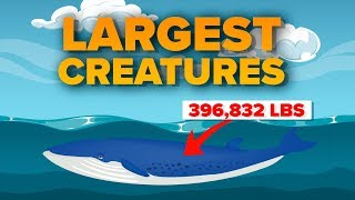 What Are the LARGEST Creatures That Exist RIGHT NOW?