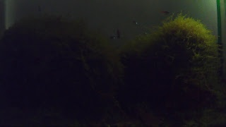 Aquarium Relaxing music 24 hours  11/2 魚樂無窮