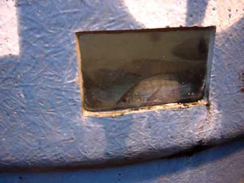 Pequena cria o de til pias e casa caixa d 39 gua de 1000 for Cria de tilapia en casa