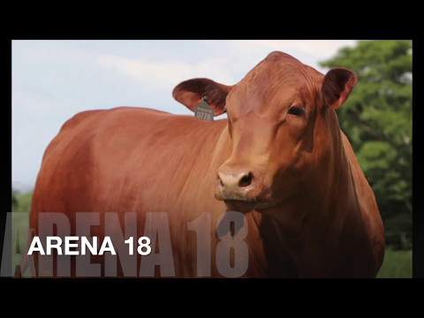 Prenhez Fêmea - ARENA 18 x PROF...
