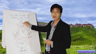 Cơ Chế Tự Điều Chỉnh Đường Glucose của Cơ Thể– Bs Hoàng Hiệp - Bshoanghiep.com