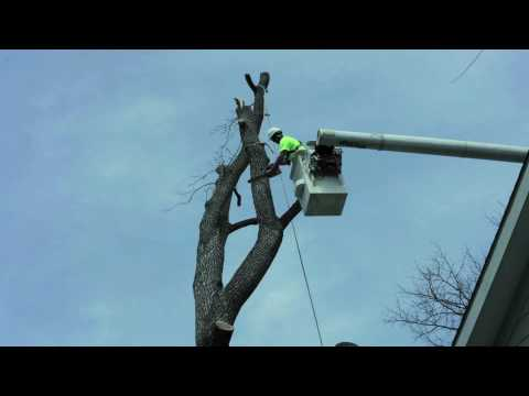 Watch Professionals Remove a Tree in Time Lapse Video