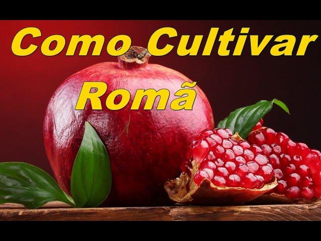 Como cultivar romã