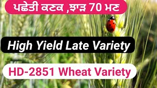 GOOD YIELD HD-2851 wheat variety (IARI)