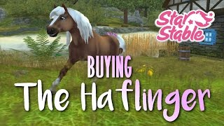 Buying the NEW Haflinger |SSO|