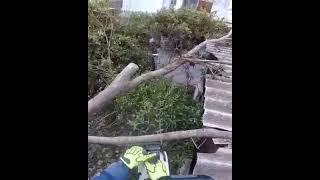 Após fortes ventos, nogueira apresenta avarias com risco de queda, em Jaguarão