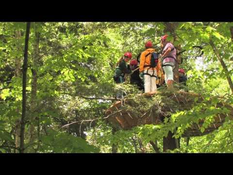Arbortrek Canopy Adventures (Summer)