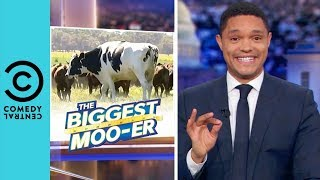 Australia's Magnificent Giant Cow | The Daily Show With Trevor Noah