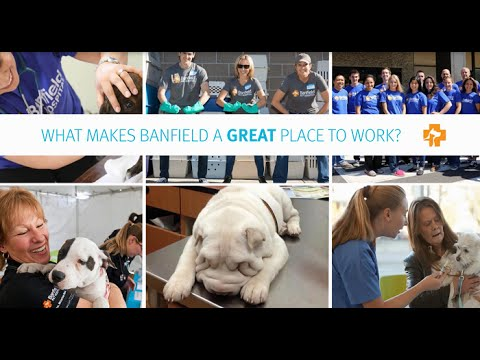 Banfield Pet Hospital - A Great Place to Work