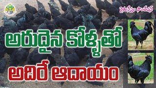 success Kadaknath kollu farm - ALI KHANKRK
