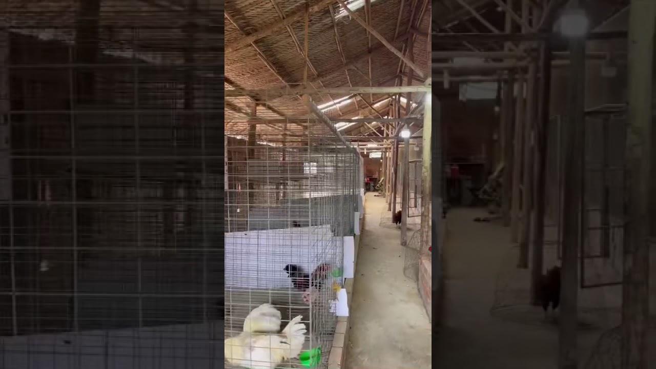 Chính chủ cần cho thuê trại nuôi gà đá, ngay khu dân cư Đại Học Bách Khoa, DT 8x32m, đủ tiện nghi