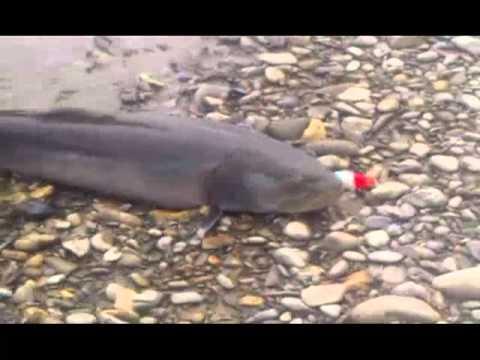 Месть тайменя или особенности рыбалки на ДВ