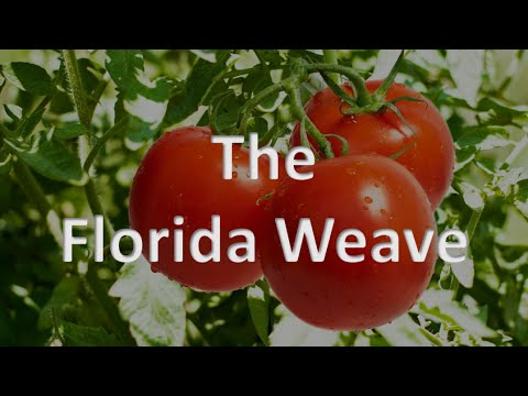 The Florida Weave