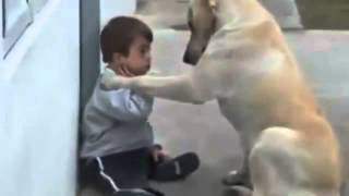 Câu chuyện cảm động về cậu bé và chú chó