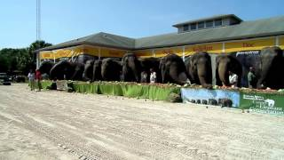 Ringling Circus Elephants Retire