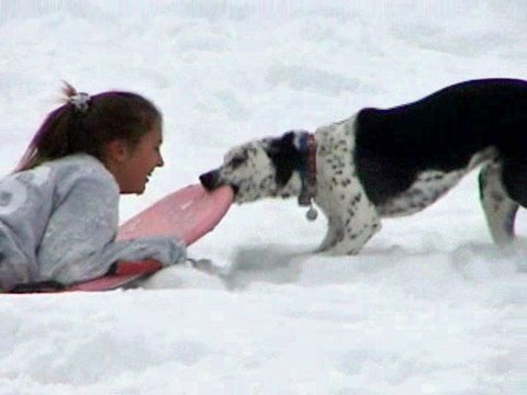 Dog steals sleds from kids - Funny