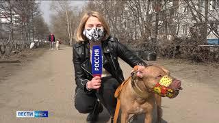В России начнут тестировать на коронавирус собак и кошек