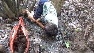 Vào Rừng phòng hộ săn CUA BIỂN ở miền tây.(catch crab in vietnam)