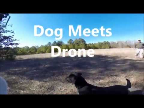 When Dog Meets Drone