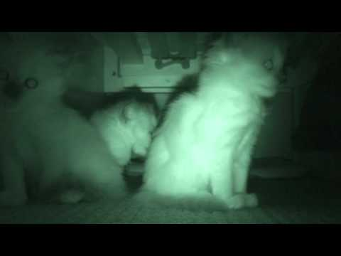 Kittens in the Dark