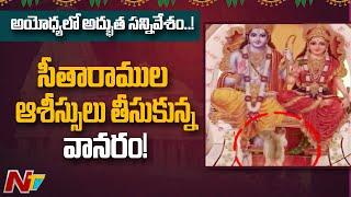 Monkey touches Lord Sri Rama, Seetha's feet, video goes vi..