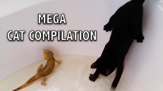 Ozzy Man Reviews: MEGA CAT COMPILATION