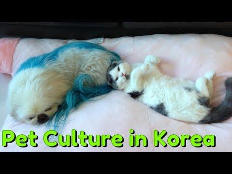 TL;DR - Pet Culture in Korea