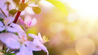 Morning Relaxing Music   Wake up with Positive Feelings