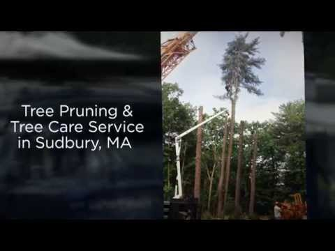 Manning Tree & Landscape, Inc in Sudbury, MA