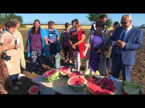Быковская бахчевая селекционная опытная станция отмечает 90-летний юбилей