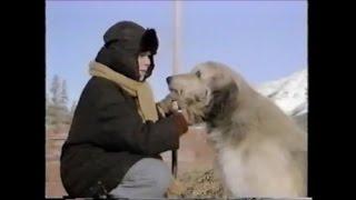 Stone Fox (1987) (TV Movie) Buddy Ebsen, Joey Cramer