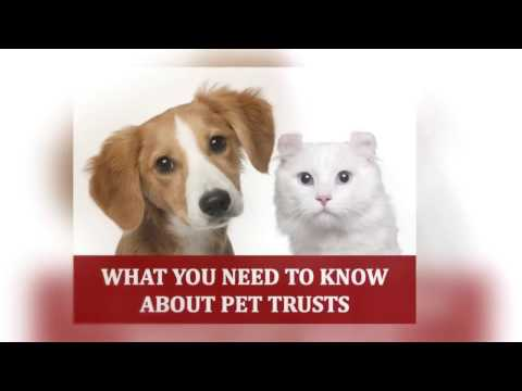 What You Need to Know About Pet Trusts in Arkansas