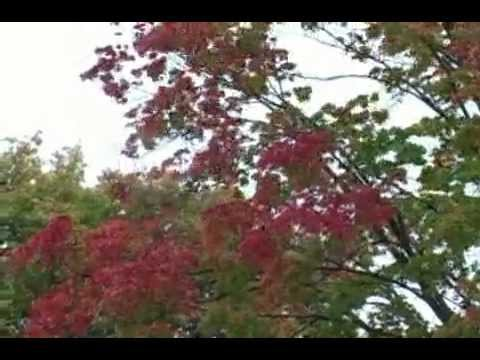 Autumn | Fall in Door County - Door County Wi Seasons