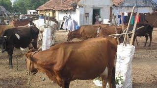 1.பால் பண்ணையம் 25 வருட அனுபவம் பாகம்-1/25 Years of Experience in /Dairy Farming
