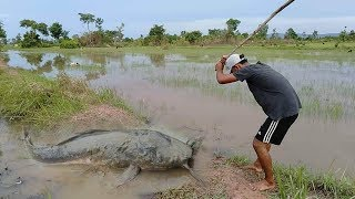 Best Hand Fishing | Amazing Man Catching Catfish Big by Hand |in Water -  Rainy season New 2019