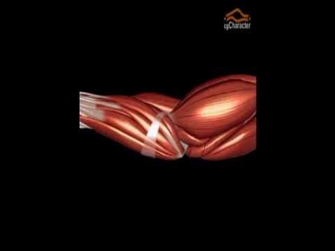 Baixar Anatomia Virtual do Cotovelo - Conceito ISAP & PR