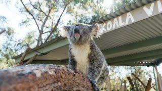 CUTEST AUSTRALIAN ANIMALS EVER!!