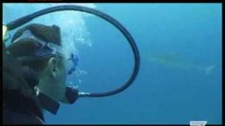 Nuotando con lo squalo tigre