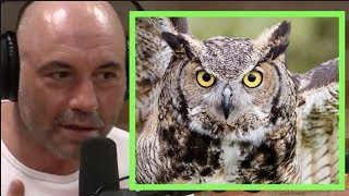 Joe Rogan | Owls Are RUTHLESS