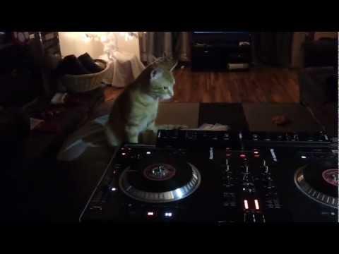 DJ Parkerr aka DJ Cat Daddy - First Time Scratching #noscratchingpost
