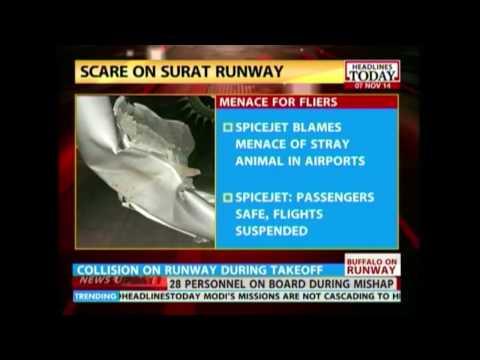 HLT : Spice Jet avoids major accident after hitting buffalo on runway