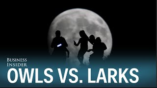 Night Owls vs Morning Larks