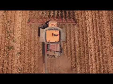 Teaming Up with AgVenture for High Yields in the Mississippi Delta