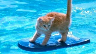1% CHANCE that these animals WON'T MAKE YOU LAUGH! - Funny ANIMALS IN POOLS videos - YouTube